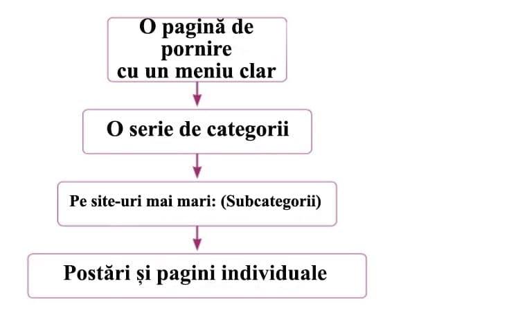 Organizare site